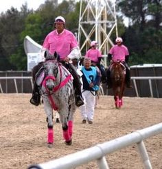 Ponies in Pink support Susan G. Komen For the Cure