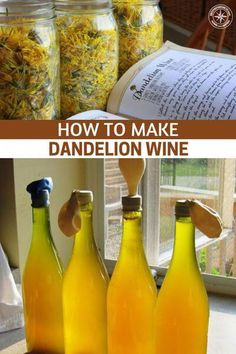 How To Make Dandelion Wine Sterilizing Canning Jars, Homemade Wine Recipes, Homemade Alcohol, Yummy Recipes, Recipies, Dandelion Recipes, Dandelion Wine, Pinot Noir Wine, Red Wine Glasses