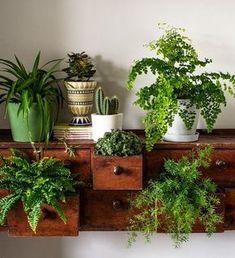 How to make the most of house plants House plants potted plants succulents ferns fig trees and green things in pots. Indoor gardening and botanical design. The post How to make the most of house plants appeared first on Garden Easy. Potted Plants, Garden Plants, Indoor Plants, Hanging Plants, Indoor Ferns, Potted Succulents, Cacti, Pots For Plants, Cactus Plants