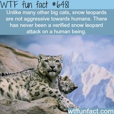 Snow Leopards - WTF fun facts-- Tanks that Get Around is an online store offering a selection of funny travel clothes for world explorers. Check out www.tanksthatgetaround.com for funny travel tank tops and world facts.