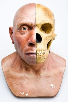 Neanderthal head reconstruction front view