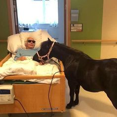 When this 89-y.o. man's health started to decline he had to be moved to a nursing home. But the man was saddened by the fact that he was no longer able to visit his granddaughter's pony, Bolla. That's when his granddaughter had a brilliant idea: she brought her pony to him.  The nursing home not only welcomed the pony into the facility, but they say the door is always open for the old man's equine pal.