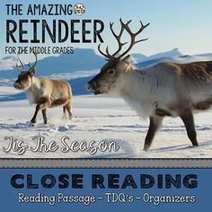 Reindeer Close Reading Passage with Text Dependent Questions Reading Strategies, Reading Activities, Teaching Reading, Reading Groups, Guided Reading, Teaching Tools, Learning, Writing Lesson Plans, Writing Lessons