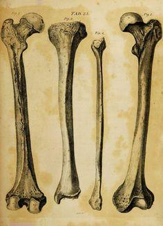 Sinelnikov atlas