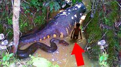 These Are The Deadliest Creatures Found In The Amazon. OMG!