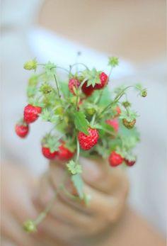 ☯ wild strawberries ☯