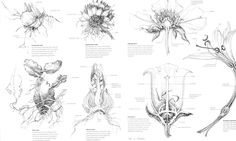 Botanical Illustration: Botany for the Artist book available on amazon by artist and author Sarah Simblet