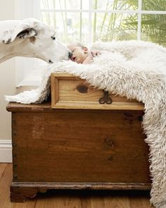Babies and Dogs  © 2012, Julia Conroy Photography. Inc