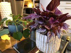 Living Room Styles, Fashion Room, Plants, Plant, Planets
