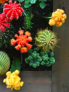 Learn how to make a vertical cactus garden to add pizzazz to even the dullest space. A living cactus canvas can create visual interest and save on water!