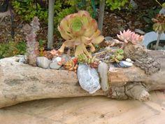 Garden Art From Junk   Garden Junk - Art / Driftwood Succulent Planter