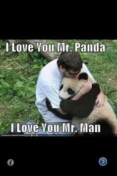 Wow, what must it be like to be hugged by a panda? Sorta like swimming with dolphins?