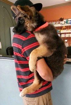 Top 5 Cutest Dog Breeds