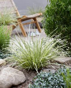 The airy leaves of this tough lomandra are perfect for mimicking dune grass at the beach. Create a stunning landscape bed by planting en mass or add intriguing texture in  # Coastal Gardens, Beach Gardens, Lomandra, Natural Landscaping, Landscaping Ideas, Easy Care Plants, Garden Beds, Garden Path, Yellow Flowers