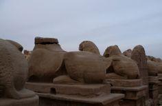 Les temples de Karnak : les sphinx du dromos menant au bassin des barques, vus de dos.
