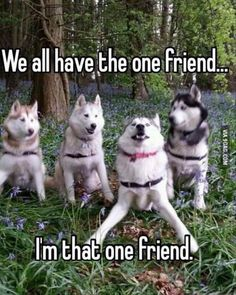 36 Of The Funniest Animal Pics Ever. Animal Memes Of The Day – 52 Pics The Best Funny Pictures Of Today's Internet Dog Memes Of The Day 32 Pics – Funny Dog Memes, Funny Animal Memes, Cute Funny Animals, Funny Animal Pictures, Funny Cute, Funny Dogs, Animal Pics, Funniest Pictures, Funny Husky