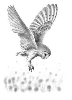 'Barn Owl in Flight II' Original Drawing