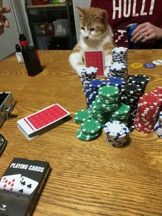My husband sent me this pic of my kitten on poker night. - 9GAG