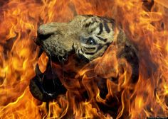 In 2001 on World Environment Day, environmentalists seized a tiger skin from poachers in Bombay, India and burnt it as a symbolic message to wildlife traders and poachers against hunting.