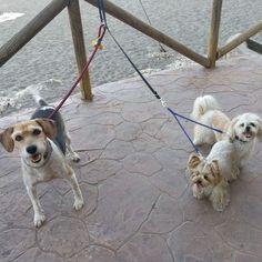 Paseo con Galita, Benji, Robin y Penny 06/17
