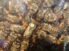 R. I. P. Bienenkönigin vom letzten Jahr Bee House, Beehive, Witches