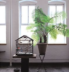 Indoor tree fern! That will be my next one I think!!
