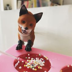 Meet Jolly-Fox! She is a fox for sweets and loves to play...❤️❤️❤️
