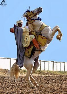 Algerian Cavalier