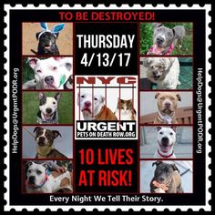 TO BE DESTROYED 04/13/17 - - Info    To rescue a Death Row Dog, Please read this:http://information.urgentpodr.org/adoption-info-and-list-of-rescues/   To view the full album, please click here: http://nycdogs.urgentpodr.org/tbd-dogs-page/ -  Click for info & Current Status: http://nycdogs.urgentpodr.org/to-be-destroyed-4915/