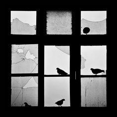 animals-looking-through-the-window-14
