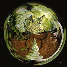 Amazing Circle - Basket of Succulants.  Copyright Nancy Kirkpatrick Photography