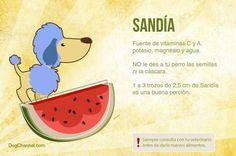 Frutas para tus perros: Sandia  Importante leer completo.  #PetsWorldMagazine #RevistaDeMascotas #Panama #FrutasParaTuMascota #Mascotas #MascotasPty #MascotasPanama #Salud #Nutricion