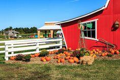 pumpkins Annabelle's Fun Farm Welch Ok
