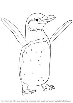 Galapagos Penguin is a penguin native to Galapagos Islands. Its scientific name is Spheniscus mendiculus. In this tutorial, we will draw Galapagos Penguin. Coloring For Kids, Coloring Books, Coloring Pages, Drawing Tutorials, Drawing Ideas, Galapagos Penguin, Penguin Drawing, Scientific Drawing, Short Eared Owl
