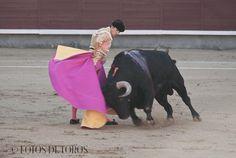 http://tusfotosdetoros.blogspot.com.es/2012/11/gerena-en-el-ruedo-especial-daniel-luque.html