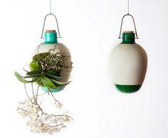 Dossofiorito's hanging Epiphytes vases allow plants to grow as...