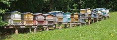https://www.icko-apiculture.com/blog/wp-content/uploads/2015/04/Ruches_Haute-Savoie.jpg