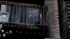 Update: Dog trapped on hot balcony without water dies, Humane Society outraged