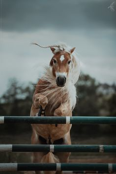 Cute Horse Pictures, Beautiful Horse Pictures, Most Beautiful Horses, Animals Beautiful, Cute Animals, Cute Horses, Pretty Horses, Horse Love, Horse Braiding