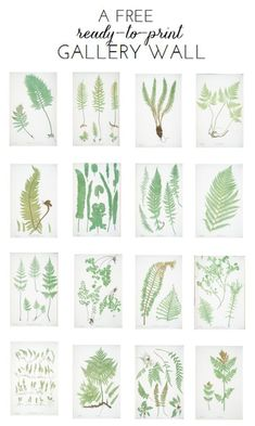 Ready-To-Print Gallery Wall: Fern Botanicals w/link to other free artwork Illustration Botanique, Free Artwork, Paper Crafts, Diy Crafts, Decor Crafts, Free Prints, My New Room, Botanical Prints, Ferns
