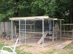 dog kennel chicken coops
