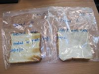 bread mold science experiements Bread mould experiment bread mould experiment bread mould experiment bread mould experiment bread mould experiment bread oo observation circle oo day 1 since it was the day that we started the experiments, there was no change the science conversational presenting for business.