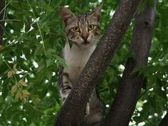 Cats In Trees, What Goes Up Sometimes Doesnt Easily Come Down