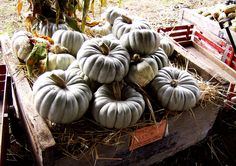 ghost pumpkins by Cranky Old Mission Guy, via Flickr