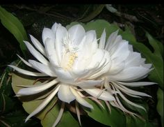 Top 10 Rarest Flower Types in The World