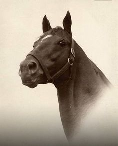 Man O' War no photo captures better the look that champions have than this..