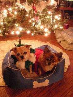 106 best holiday animals images on pinterest adorable animals from aspca holidays photo contest m4hsunfo