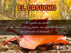 Otoño Casucho Murcia, Movies, Movie Posters, Illusions, Film Poster, Films, Popcorn Posters, Film Books, Movie