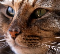Expert Cat Tips For Owners To Follow - http://purebredcatrescue.net/expert-cat-tips-for-owners-to-follow/