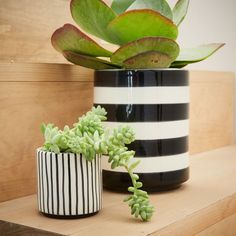 Great gift idea for Mom: Made and glazed in Portugal, these black and white striped Cache Pots look great filled with air plants and succulents.